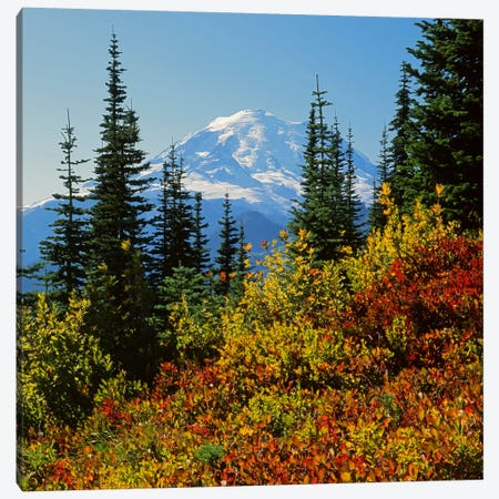 Mount Rainier With An Autumn Landscape In The Foreground, Mount Rainier National Park, Washington, USA Canvas Print #CGU9} by Charles Gurche Canvas Art