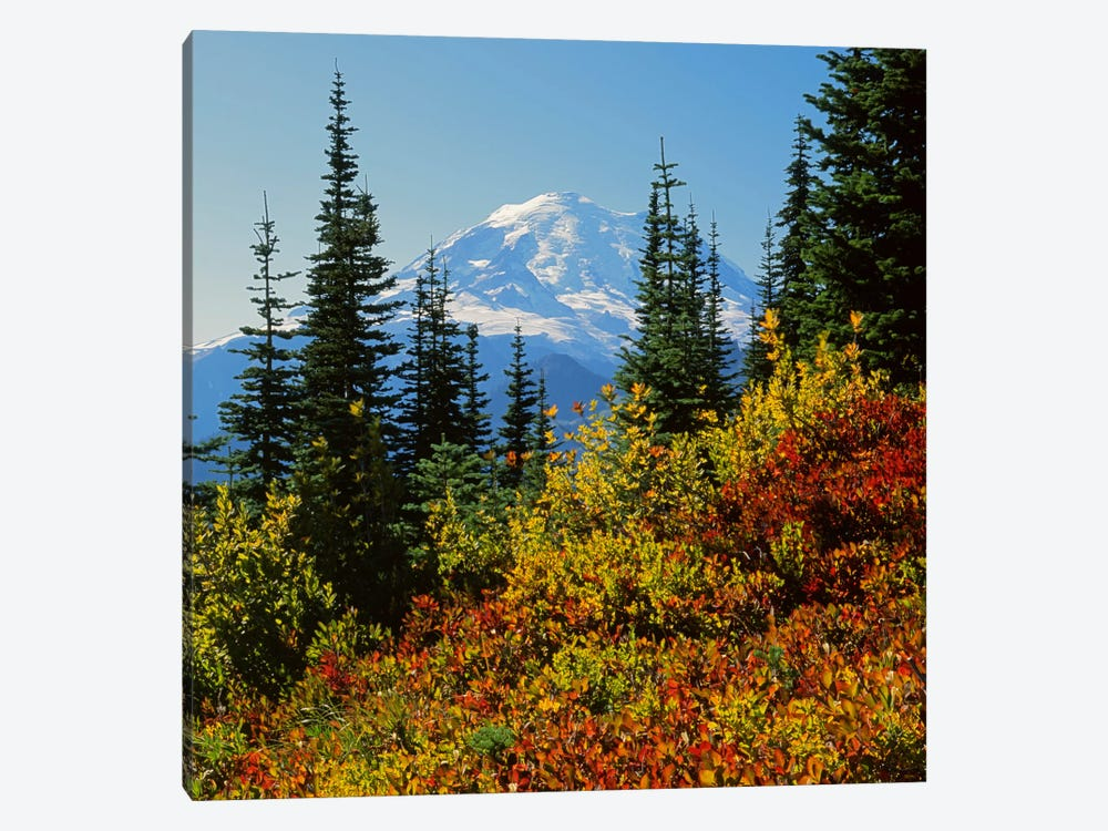 Mount Rainier With An Autumn Landscape In The Foreground, Mount Rainier National Park, Washington, USA by Charles Gurche 1-piece Canvas Art