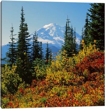 Mount Rainier With An Autumn Landscape In The Foreground, Mount Rainier National Park, Washington, USA Canvas Art Print