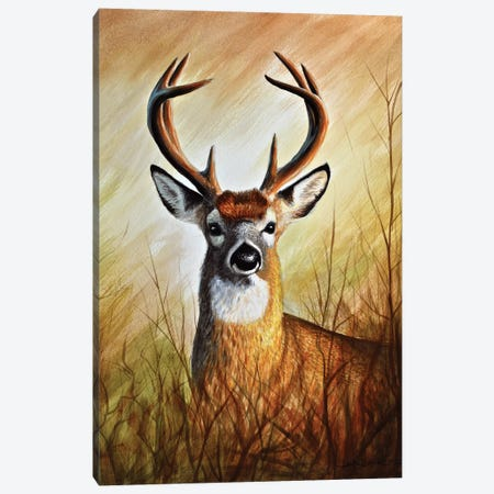 Backwood's Monarch Canvas Print #CHB12} by Chuck Black Art Print