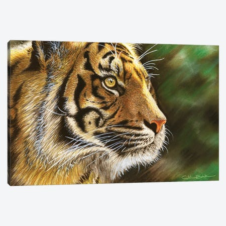 Into The Jungle 3-Piece Canvas #CHB33} by Chuck Black Canvas Print