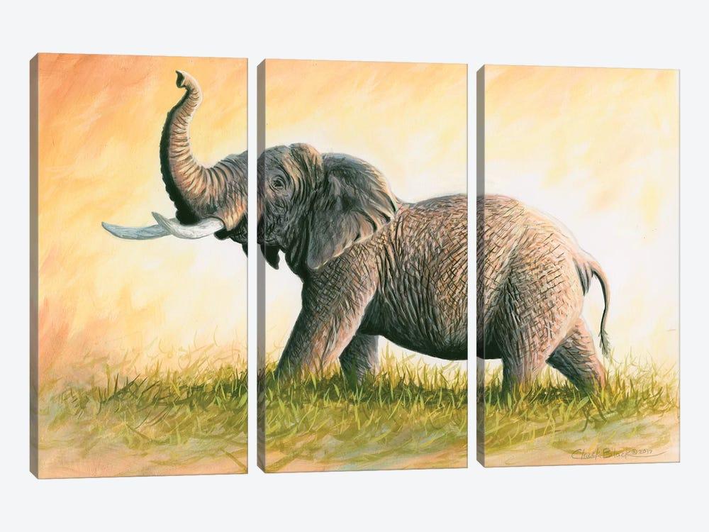 Majesty by Chuck Black 3-piece Canvas Artwork