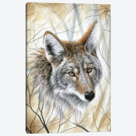 A Wild Gaze Canvas Print #CHB4} by Chuck Black Canvas Artwork