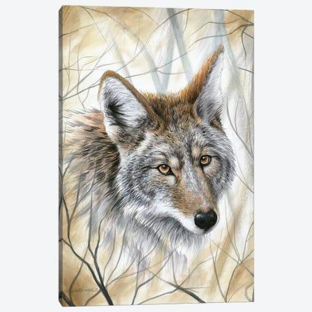 A Wild Gaze Canvas Print #CHB4} by Chuck Black Canvas Artwork