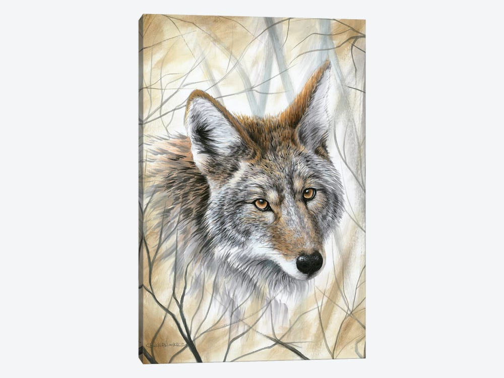 A Wild Gaze by Chuck Black 1-piece Canvas Artwork