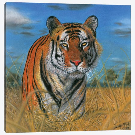 Scoping Its Prey Canvas Print #CHB52} by Chuck Black Canvas Print