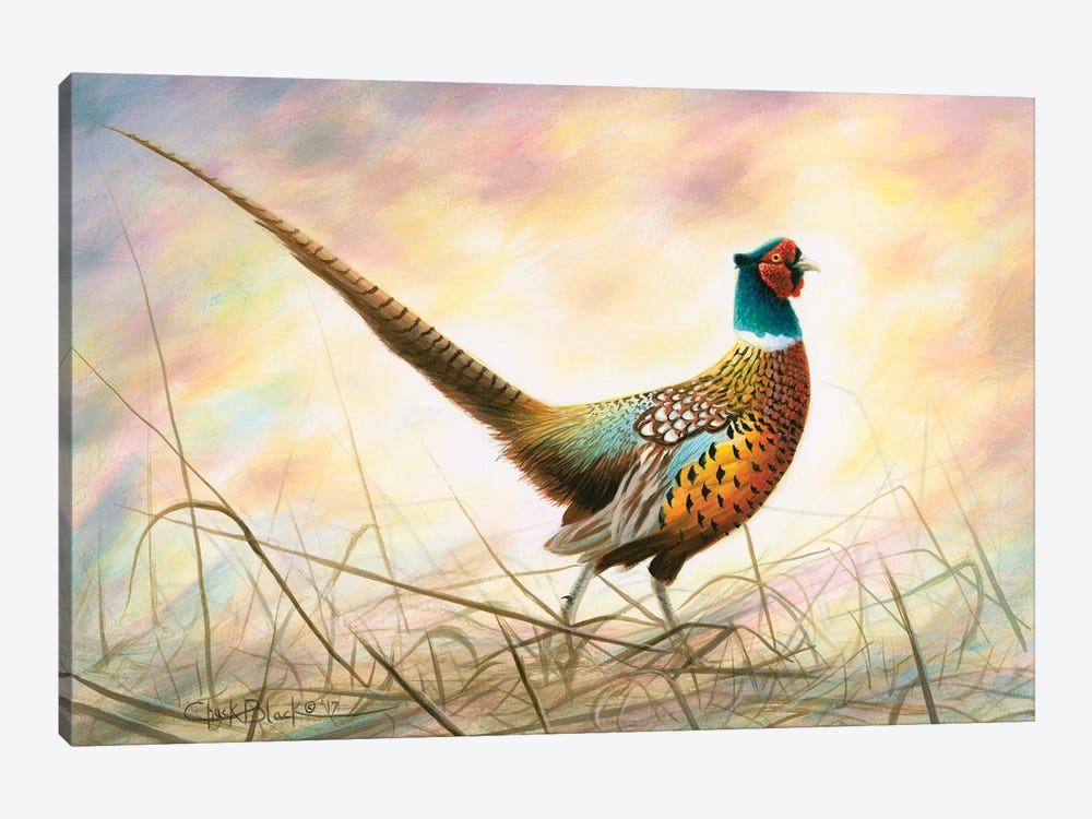 Spring Rooster by Chuck Black 1-piece Canvas Art