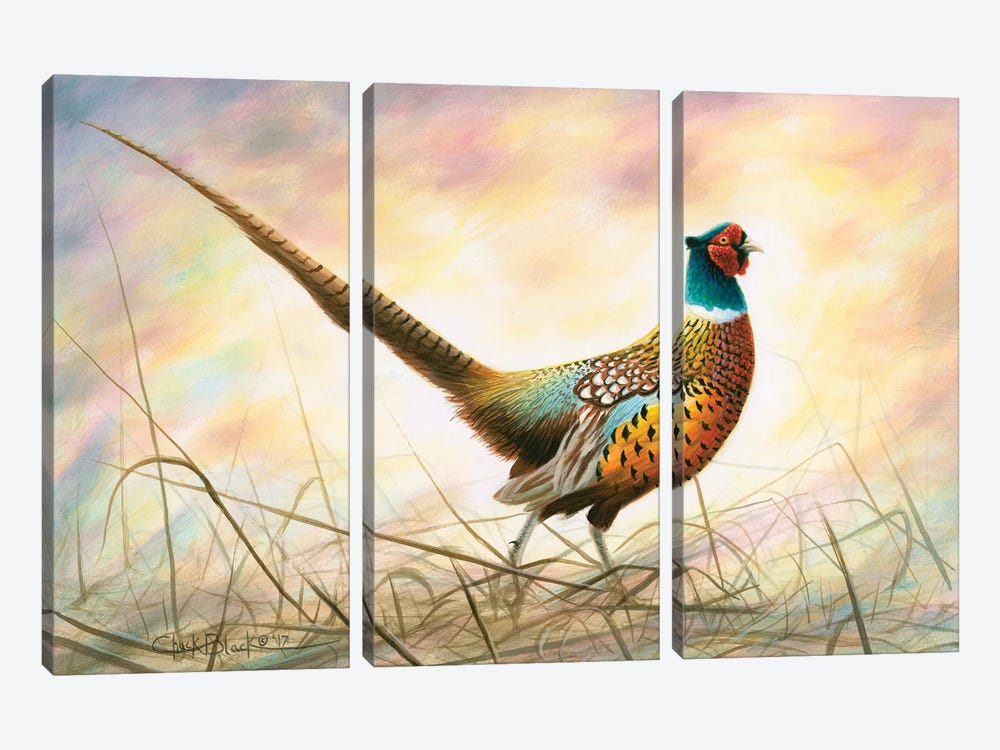Spring Rooster by Chuck Black 3-piece Canvas Artwork