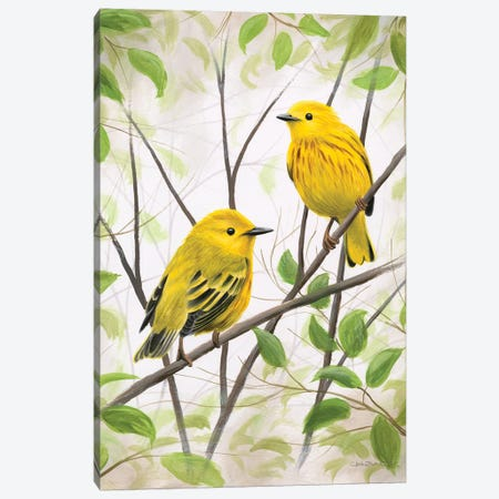 Springtime Warblers Canvas Print #CHB56} by Chuck Black Canvas Artwork
