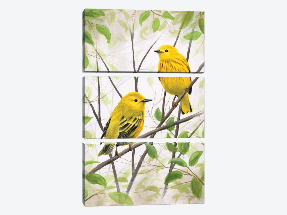 Springtime Warblers by Chuck Black 3-piece Canvas Art