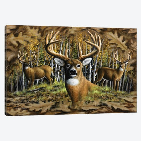 Whitetail Country Canvas Print #CHB83} by Chuck Black Canvas Artwork