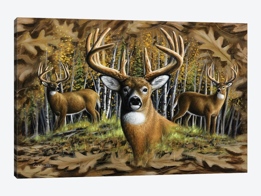 Whitetail Country by Chuck Black 1-piece Canvas Artwork