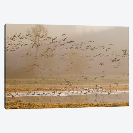 Wetlands at sunrise Canvas Print #CHE138} by Ken Archer Canvas Artwork