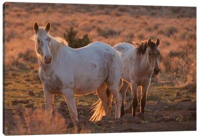 Wild horses at sunset Canvas Art Print