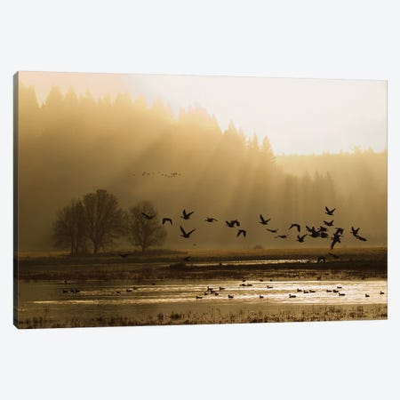 Lesser Canada Geese flying at dawn 3-Piece Canvas #CHE21} by Ken Archer Art Print