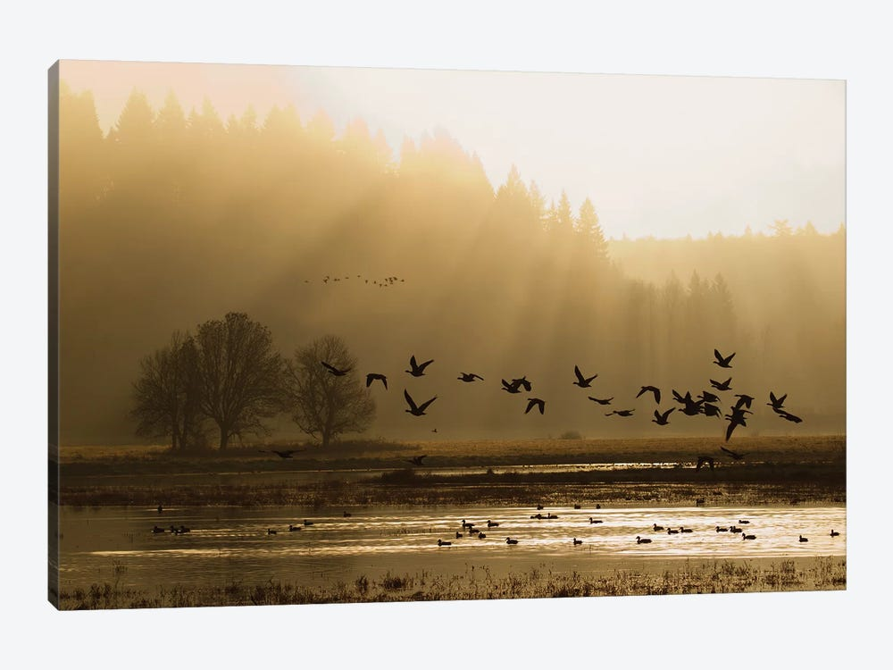 Lesser Canada Geese flying at dawn by Ken Archer 1-piece Canvas Art Print