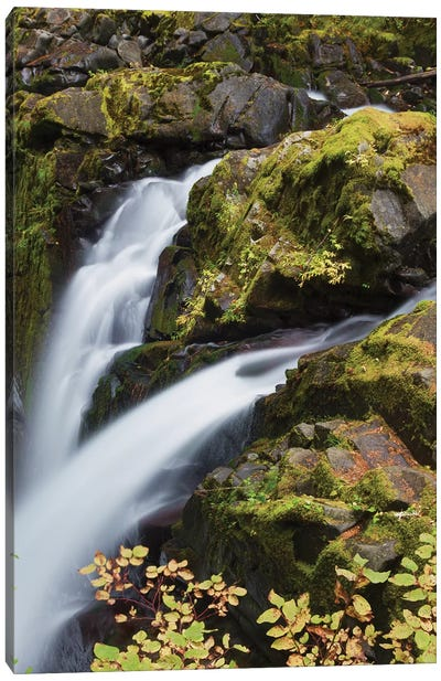 Sol Duc Falls, Olympic National Park Canvas Art Print