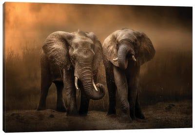 Elephants Dust Bath... Canvas Art Print