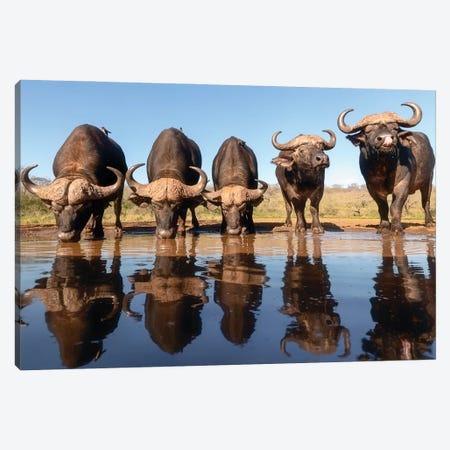 Buffaloes By The Waterhole... Canvas Print #CHG9} by Charlaine Gerber Canvas Art