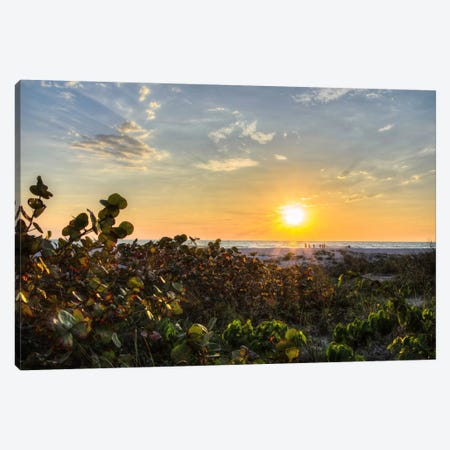Sea Grapes At Sunset Canvas Print #CHK10} by Chuck Burdick Canvas Artwork