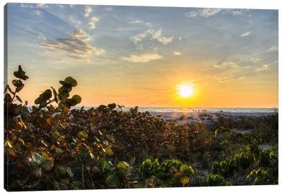 Sea Grapes At Sunset Canvas Print #CHK10
