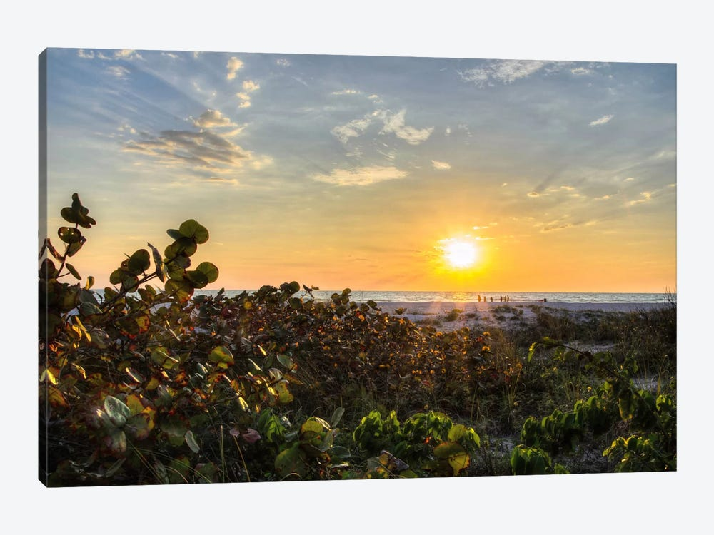 Sea Grapes At Sunset by Chuck Burdick 1-piece Canvas Wall Art