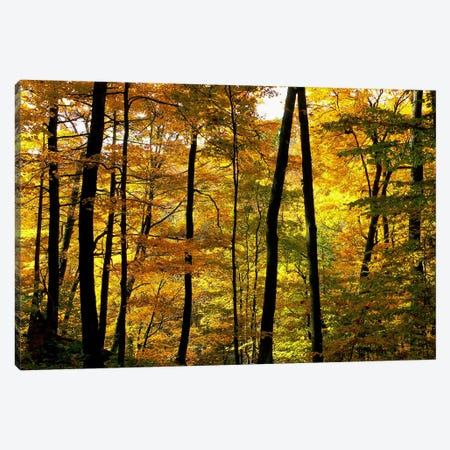 Fall Colors Canvas Print #CHK5} by Chuck Burdick Canvas Art Print