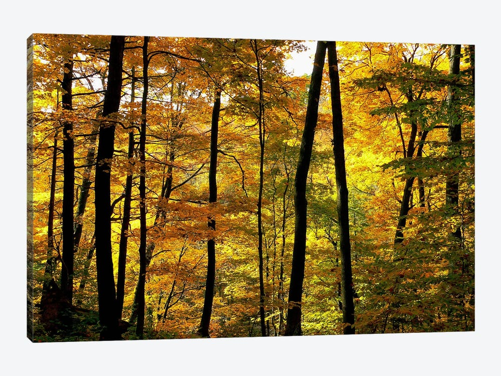 Fall Colors by Chuck Burdick 1-piece Canvas Artwork