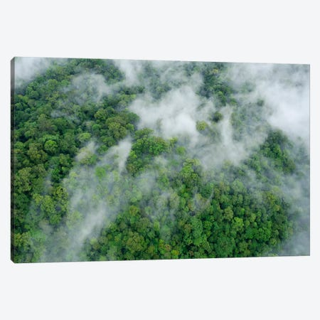 Primary Rainforest, Eastern Sabah, Borneo, Malaysia Canvas Print #CHL8} by Ch'ien Lee Canvas Print