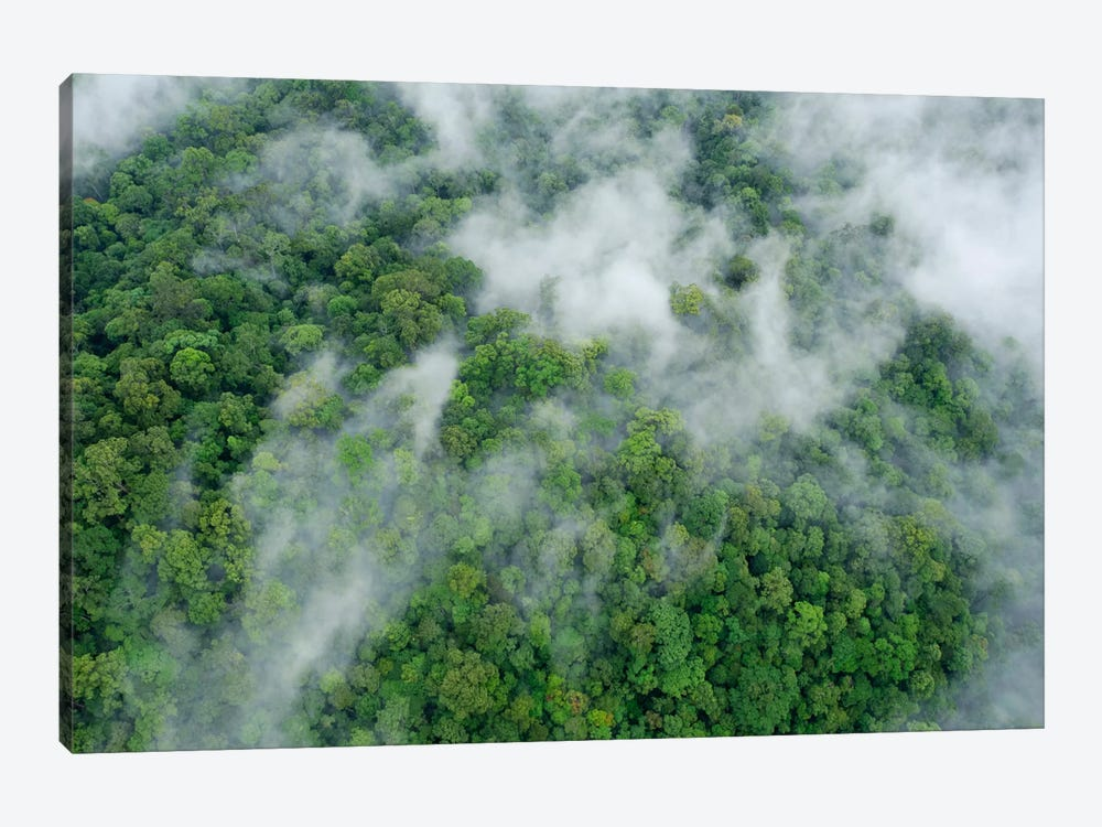 Primary Rainforest, Eastern Sabah, Borneo, Malaysia by Ch'ien Lee 1-piece Canvas Wall Art