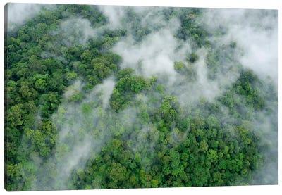 Primary Rainforest, Eastern Sabah, Borneo, Malaysia Canvas Art Print