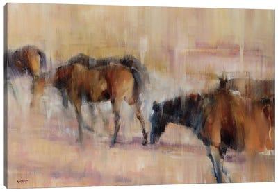 Kentucky Morning I Canvas Art Print