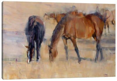 Kentucky Morning II Canvas Art Print