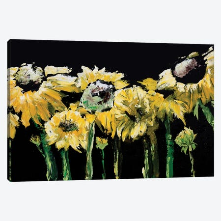 Sunflower Field on Black Canvas Print #CHP10} by Marcy Chapman Canvas Art Print