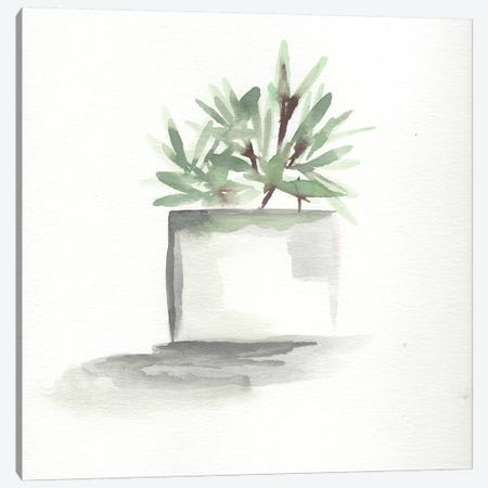 Watercolor Cactus Still Life IV Canvas Print #CHP22} by Marcy Chapman Canvas Wall Art