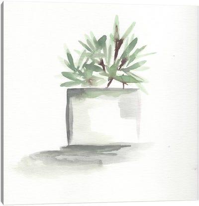 Watercolor Cactus Still Life IV Canvas Art Print