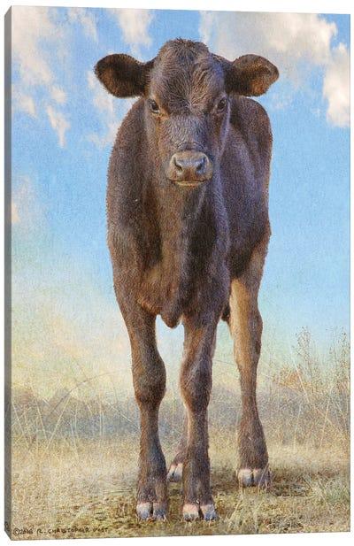Cute Black Calf Canvas Art Print