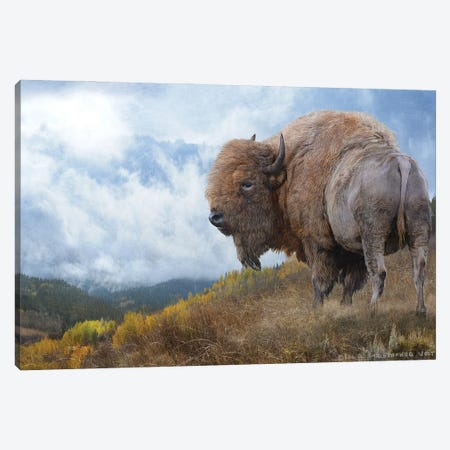 Golden Bison II Canvas Print #CHV11} by Christopher Vest Art Print