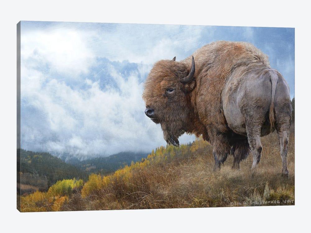 Golden Bison II by Christopher Vest 1-piece Canvas Art Print
