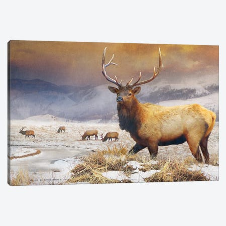 Jackson Refuge Elk Canvas Print #CHV12} by Christopher Vest Canvas Print