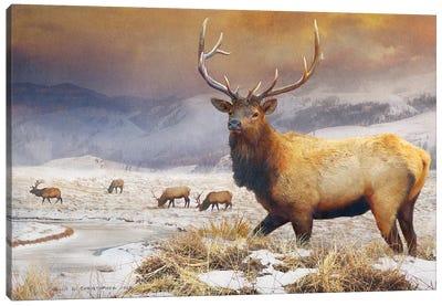 Jackson Refuge Elk Canvas Art Print