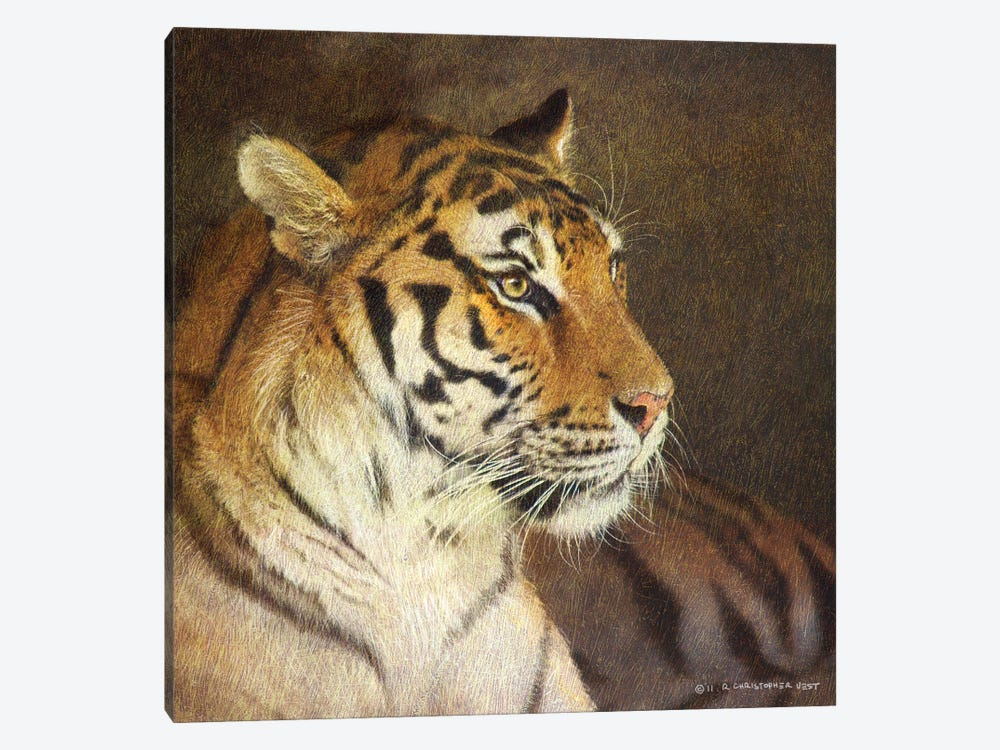 Tiger by Christopher Vest 1-piece Canvas Art Print