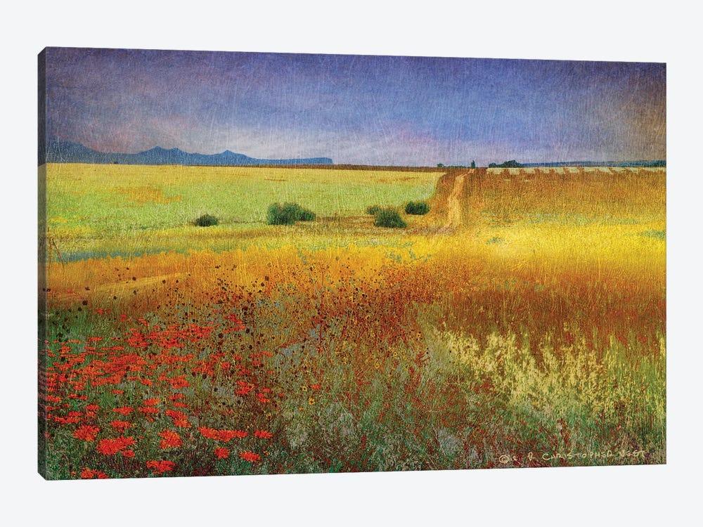 Branch Long Road by Christopher Vest 1-piece Canvas Artwork