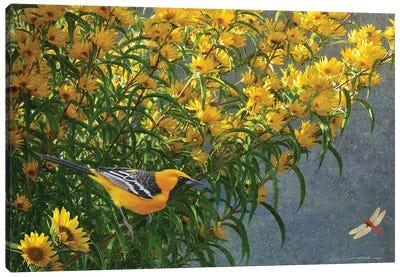 Yellow Flowers Oriole Canvas Art Print