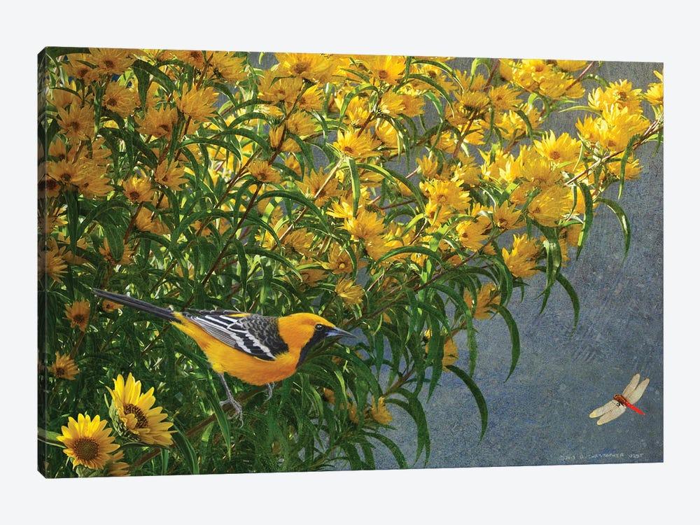 Yellow Flowers Oriole by Christopher Vest 1-piece Canvas Art Print