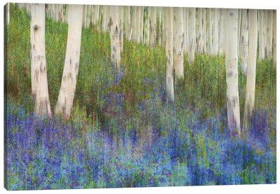 Aspen Forest Floor Canvas Art Print