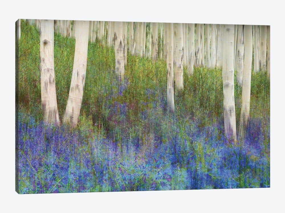 Aspen Forest Floor by Christopher Vest 1-piece Art Print