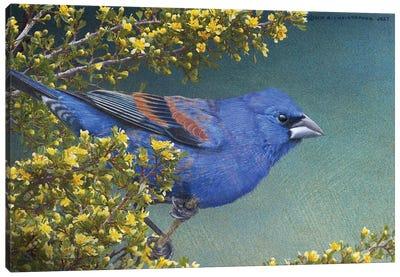 Blue Grosbeak Canvas Art Print