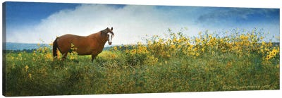 Horse in Flowers I Canvas Art Print