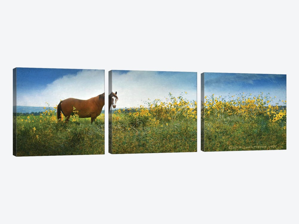 Horse in Flowers I by Christopher Vest 3-piece Art Print